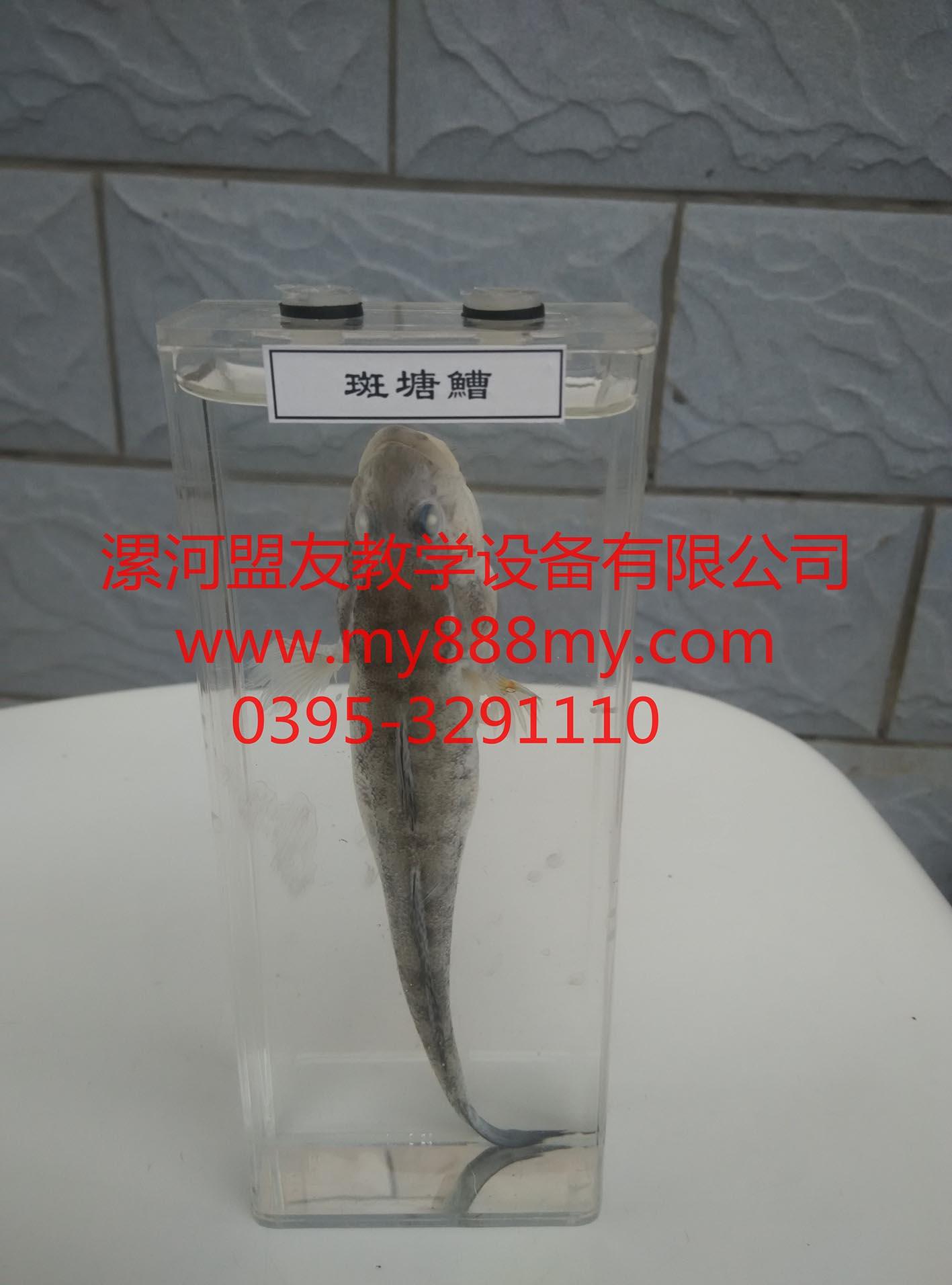 节肢动物浸制标本 询价bb-dw0002