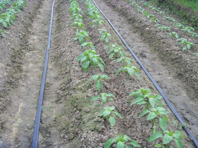 农田专用喷灌带-供应潍坊新品喷灌带