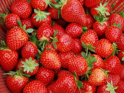 妙香7號草莓苗銷售價格