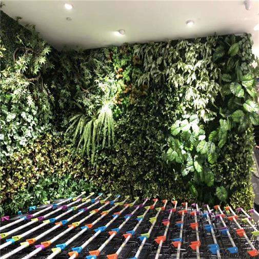 安徽大型植物墻定制 歡迎咨詢