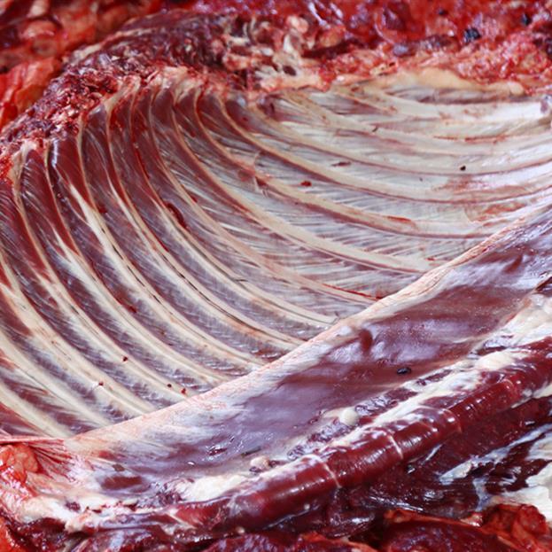山東淄博批發生驢肉驢下水 驢板腸 品質保證