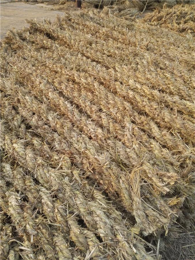 广州草棍条形草支垫