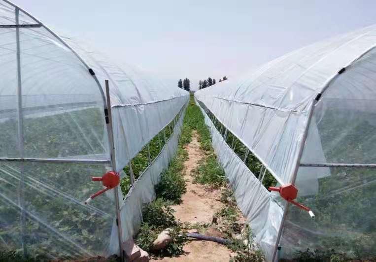 温室养殖大棚 杭州单体棚 供应厂家