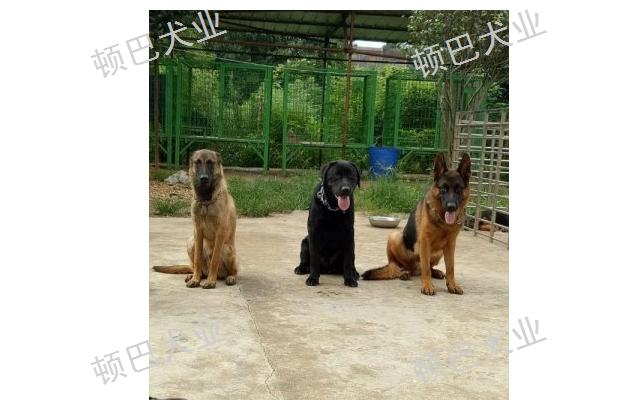 五华区训狗基地 欢迎咨询 昆明顿巴犬业供应